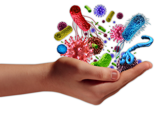 How does your immune system work?