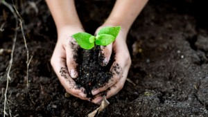 Hands Holding Soil and Sapling